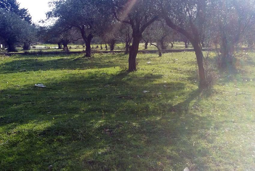 Kolympia village plot for sale