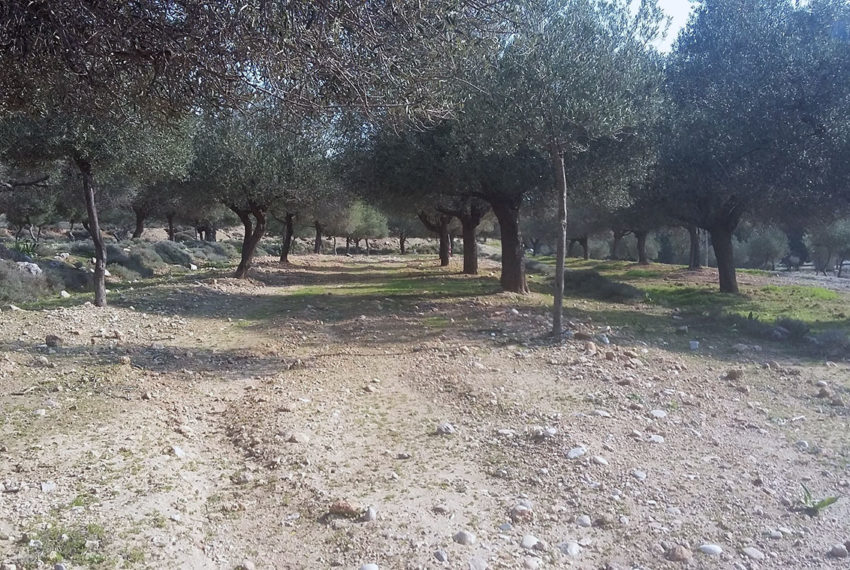Rhodes plot for sale