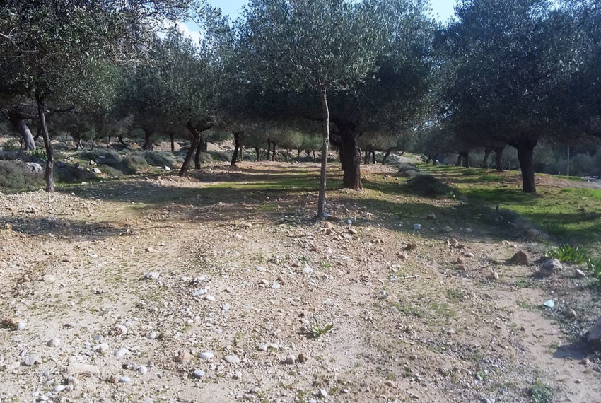 Tsampika village Rodos land for sale