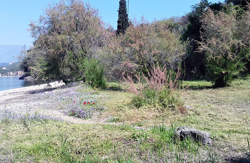 land for sale in Pelion Greece